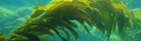 Algele marine, comori de sănătate din adâncuri