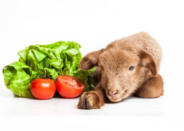 traditie si veganist - rawdia