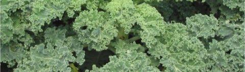 Funzele de kale, printre cele mai sănătoase alimente de pe pământ