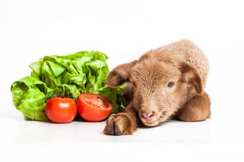 Traditie si veganism